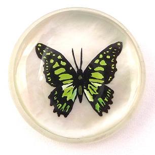H&T Carvings_s grüner Falter